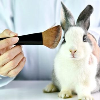 How To Find Out If a Cosmetic Is Cruelty Free?